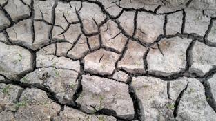 22.01.2020 11:00 Ostatnie tygodnie były bardzo suche. Czy to oznacza, że czeka nas trzeci z rzędu rok suszy i pożarów?