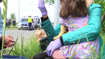 Władze Belgii i polski sąd: 4-letnia Ines powinna wrócić do ojca
