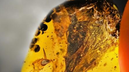 Odkryto niezwykłą, liczącą 99 milionów lat czaszkę dinozaura-kolibra (film)