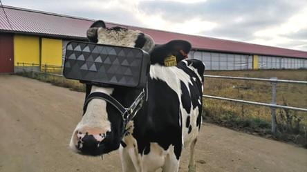 Moskiewskie krowy kochają technologię i na co dzień relaksują się w headsetach VR