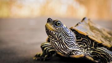 2020-05-29 Poszli do szamana po krew żółwia na koronawirusa. Stracili dziecko, drugie walczy o życie