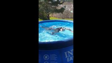 Mistrzyni olimpijska trenuje w... basenie ogrodowym