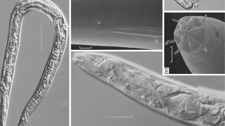 Rosjanie ożywili zamrożone nicienie liczące sobie ponad 30 tysięcy lat