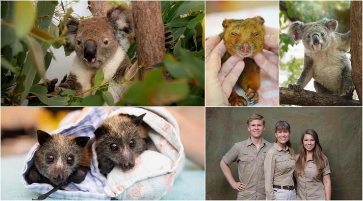 """Rodzina słynnego """"Łowcy krokodyli"""" ratuje zwierzęta w Australii. Jej szpital jest oblegany"""