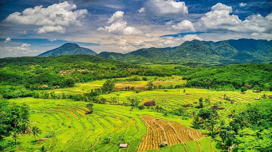Słynne tarasy ryżowe w Indonezji. Fot. Max Pixel / Pexels.