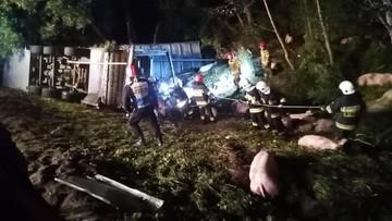 Wypadek ciężarówki przewożącej świnie. Kierowca nie przeżył