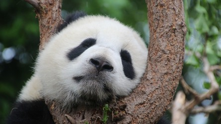 Najnowszy raport WWF ujawnia tragiczny stan dzikiej przyrody
