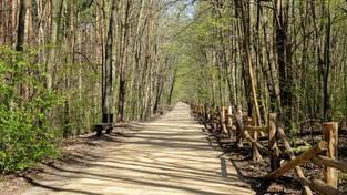 02.03.2020 00:00 Pierwsze oznaki wiosny w lesie (4K)