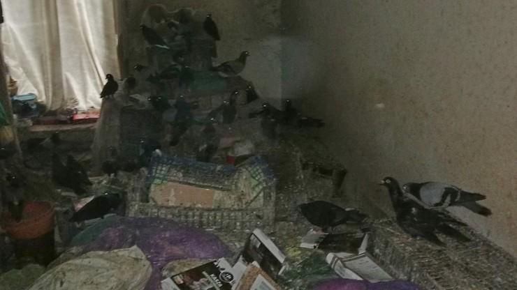 Horror w krakowskiej kamienicy. Pokój wypełniały martwe i zmaltretowane ptaki