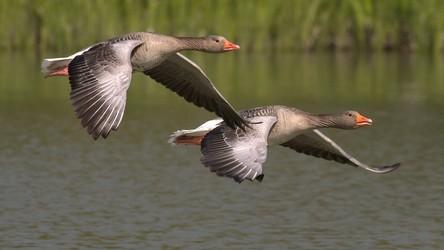 Naukowcy odkryli, dlaczego ptaki są coraz mniejsze, a ich skrzydła coraz większe