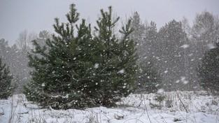 02.02.2020 00:00 Pada śnieg na Mazurach