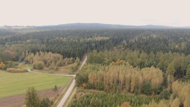 Mandat do 500 zł grozi grzybiarzom za wjazd do lasu