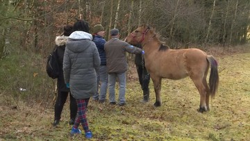 Walka aktywistów o konia. W pysk wrosły mu pasy