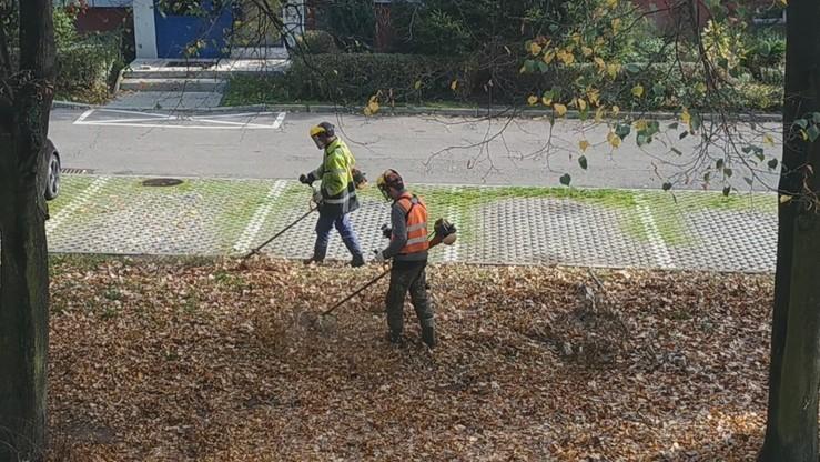 Kosili suche liście w Katowicach. Miasto odpowiada: wyciągniemy konsekwencje