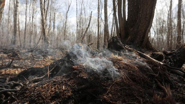 Najwyższe zagrożenie pożarowe w polskich lasach. Pożary również w Holandii i Szkocji