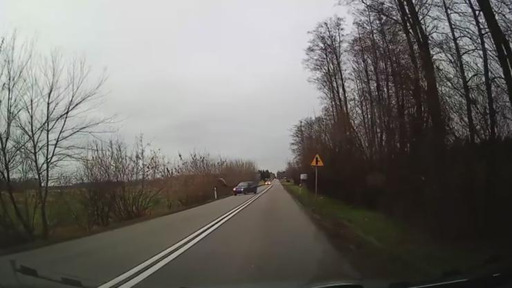 Dachowanie auta po zderzeniu z jeleniem [WIDEO]