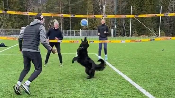 Najsłynniejszy pies siatkarz powrócił! Tym razem... zagrał w meczu (WIDEO)