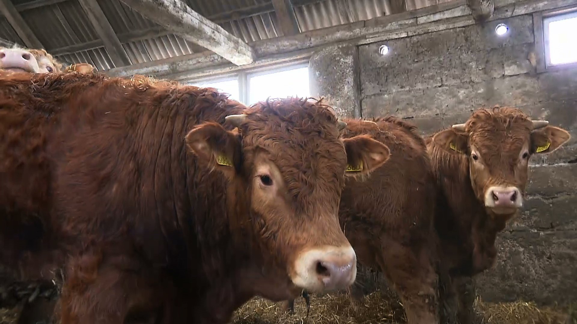 """""""Zmiana systemu żywności i rolnictwa jest kluczowa"""". Naukowcy zalecają wegetarianizm"""