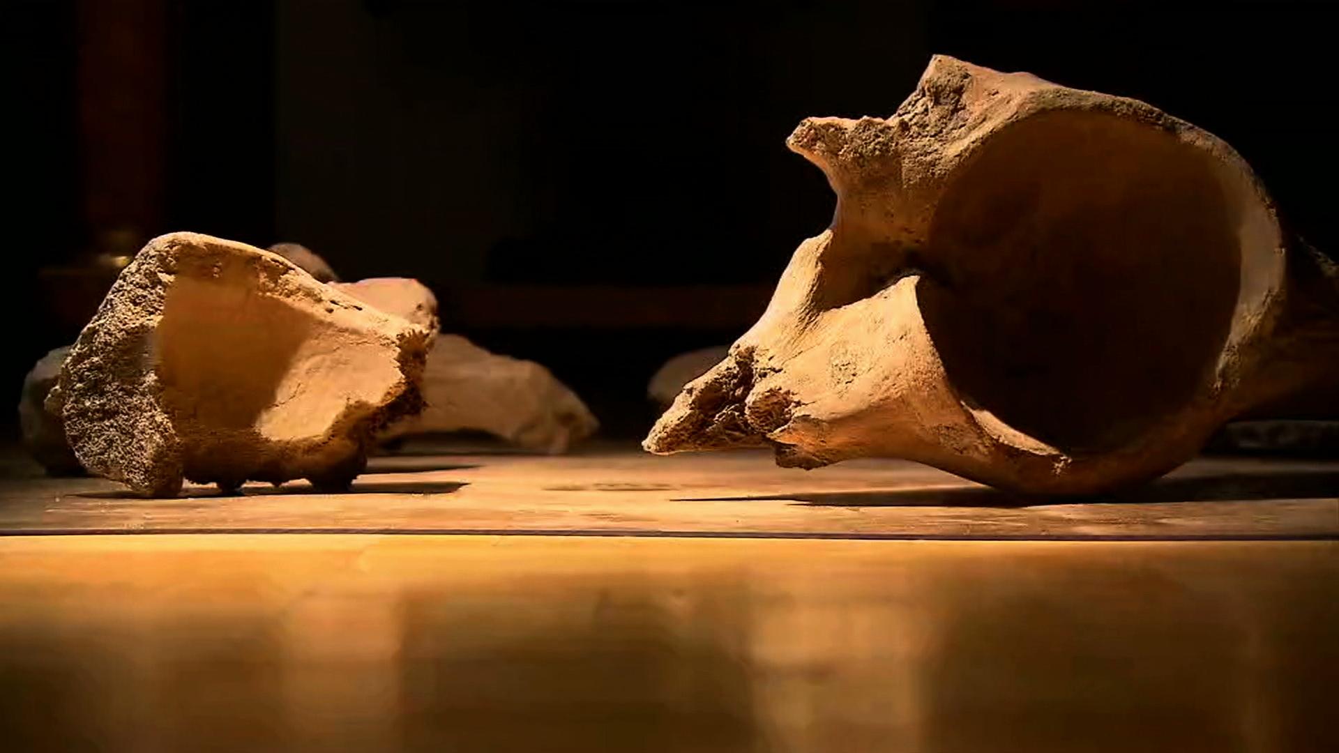 Szczątki ssaka sprzed stu tysięcy lat. To mamut czy słoń leśny?