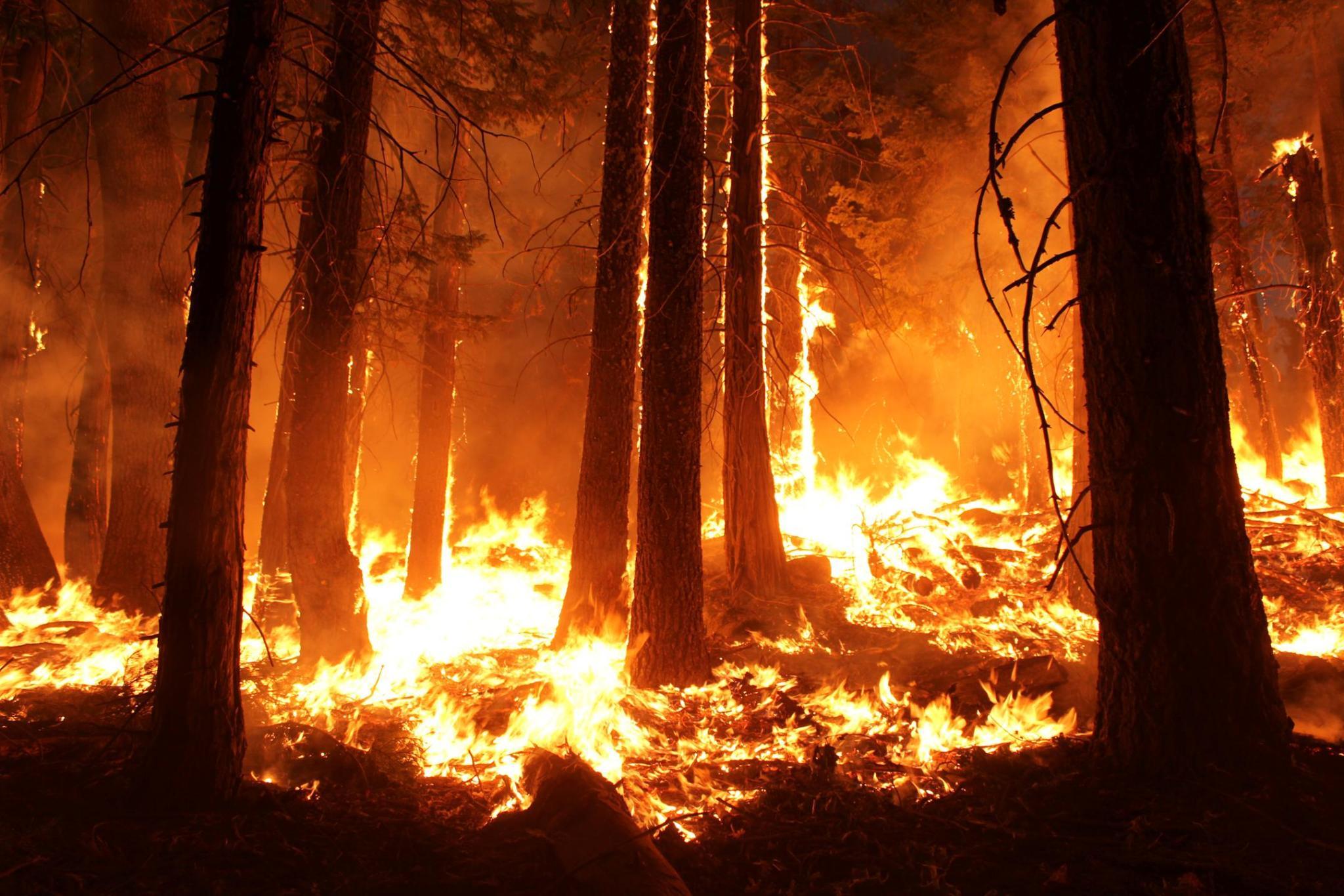 Pożar Rim Fire w Kalifornii (2013)